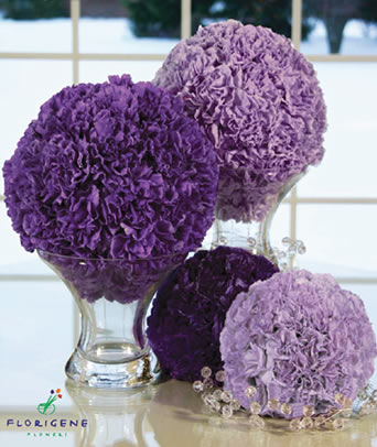 moon-series-carnations