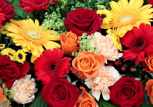 close-view-of-jubilation-tatton-flower-show