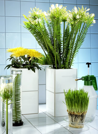 agapanthus-vase-arrangement