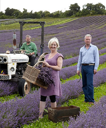 long-barn-lavender-growers